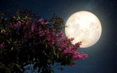 Ceremoni vid fullmåne
